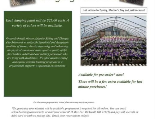 Hanging Plant Sale!